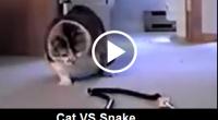 cat-vs-snake