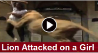 Lion Attacked on a Girl, the death of a pet, girl attacked by pitbull, male lion and female lion, kill lions, girl lion